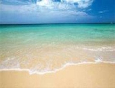 Anémona - Playa